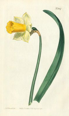 William Curtis Botanical Prints 1787-1826