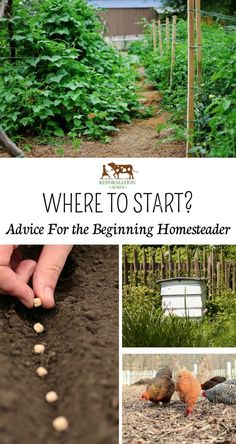 So you've got a new homestead & can't wait to get begin living your dream! Here's some good advice to on where to get started.: