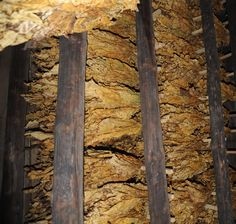 A tobacco barn smelled great.  Not a cigarette or smoky smell. A genuine North Carolina fragrance! http://www.nc-climate.ncsu.edu/secc_edu/images/DSC_7375_mod.JPG