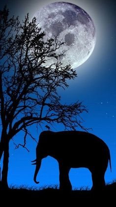 Elephant silhouette against deep blue sky lit by a full moon. Photo Elephant, Elephant Love, Elephant Meaning, Wild Elephant, Stars Night, Stars And Moon, Sky Moon, Beautiful Creatures, Animals Beautiful