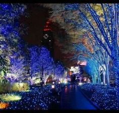 Christmas lights in Japan. Japan showcases massive light decorations in many cities that just about make you want to cry. Never seen anything remotely close to the briliant illumination they display. Merry Christmas, Blue Christmas, Christmas Lights, Christmas Time, Holiday Lights, Beautiful Christmas, Japanese Christmas, Magical Christmas, Griswold Christmas