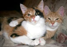i can't believe these cats look like the cats i had over a decade ago...dax and dakota. oh boy do i miss those cats!!