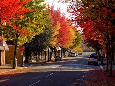 1000+ images about Roseburg, Oregon on Pinterest | Oregon ...