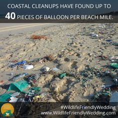 Balloons threaten marine wildlife, so opt for litter-free decorations and sendoffs. Disposable Plates, Second Hand Stores, Wedding Costs, Wipe Out, Invitation Paper, Endangered Species, Glass Containers, Big Day, North America