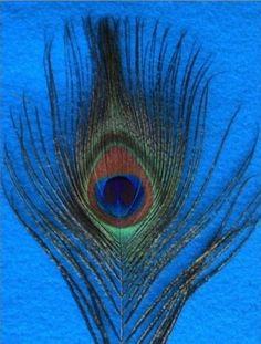 Shop Blue Background Peacock Feather Postcard created by BuzBuzBuz. Peacock Feathers, Peacocks, Blue Backgrounds, Animals, Beautiful, Animaux, Peacock, Animal, Peacoats