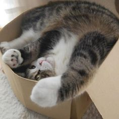 Do I fit?!?