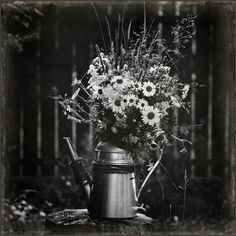 photo: Wildflowers | photographer: Andy Prokh | WWW.PHOTODOM.COM