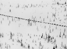 Credit: Sebastião Salgado/Amazonas/nbpictures The caravan of sledges prepares to cross the Ob river. The trees here are much smaller than th...