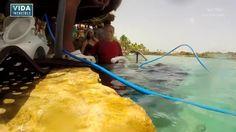 Sea TREK® provee un casco que te permite respirar normalmente mientras buceas y disfrutas un encuentro con la vida submarina.