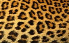 leopard print - Google Search