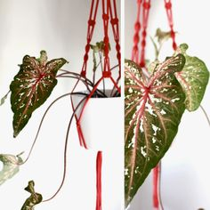 Beau Monde Mama: THE GUIDE TO INDOOR PLANTS