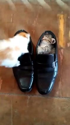 Cute Baby Cats Funny Kittens Videos - La mejor imagen sobre healthy recipes para tu gusto E - Cute Kittens, Cute Baby Cats, Funny Cute Cats, Cute Little Animals, Cute Funny Animals, Cute Babies, Ragdoll Kittens, Adorable Kittens, Siamese Cats