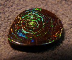 Opalized Fossilized Wood #Gemstones #Jewelry #Gems #Opal