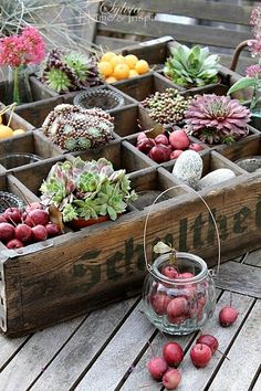 succulents, stones, and nature treasures... in an old vintage crate (kids on the porch)