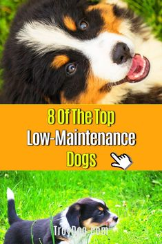 There are many requirements to consider when deciding to keep a dog. For  example, whether he belongs to the easy-care dog breeds, whether he  needs a lot of exercises or a lot of training in order to stay fit not  only physically but also mentally. If you want a … Cutest Small Dog Breeds, Best Dog Breeds, Funny Dog Videos, Funny Dogs, Dangerous Foods For Dogs, Can Dogs Eat Oranges, Dog Cleaning, Dog Facts