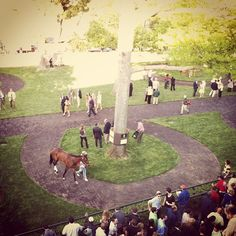 Keeneland. Lexington, Kentucky.