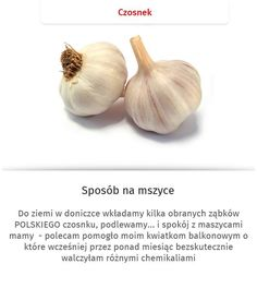 Czy wiecie, że czosnek... Helpful Hints, Garlic, Remedies, Home And Garden, Good Things, Vegetables, Advice, Gardening, Tips