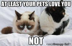 Grumpy Cat: At least your pets love you NOT
