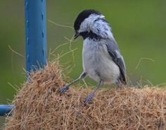 Take care of your feathered friends by adding nesting materials to your garden. Love it!