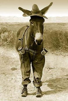 This is not a donkey. This is a mule. It bugs me when city folks get them mixed up. Donkeys and mules have entirely different looks and personalities. A mule is probably almost as smart as most men, and smarter than some.