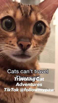 Adorable Cat Travels the World