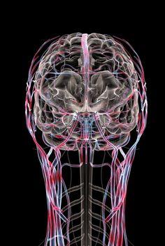 innercool brain by Bryan Christie's fine art photography