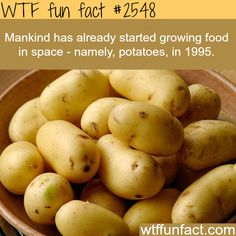 Growing food in space - WTF fun facts