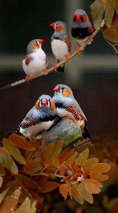 Finches sitting pretty.