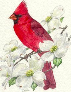 Cardinal on Dogwood by Judy Mizell