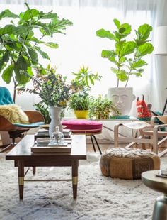 HomeGoods | Decorating with Indoor Plants - Fiddle leaf figs