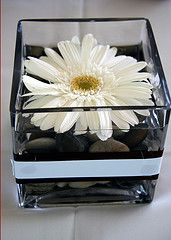White gerbera daisy center piece. so darn cute and simple love it! since my colors are pink and grey could add a pink ribbon around it