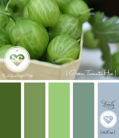064 Green Tomato Hue by Asmalina © 2012 Sorbetcolour ™