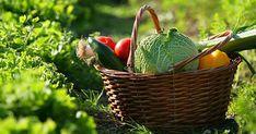 Voici laliste des meilleurs aliments pour la santé, de leurs apports en nutriments, et de leurs vertus médicinales et curatives. On l'oublie souvent, mais il suffit parfois de manger le bon aliment à la bonne période pour être en bonne santé. Cette liste vous aidera à faire votre liste de courses pour une alimentation saine …
