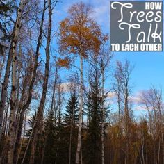 How Trees Talk To Each Other by Of Houses and Trees | We all know trees are living organisms, but did you know they can talk? Learn how trees talk to each other and how you can help them continue to do so. Click through to read more on this project as well as posts about architecture, interior design and sustainability at www.ofhousesandtrees.com.