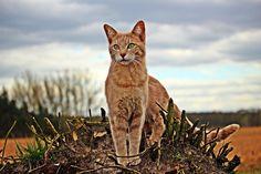 Standing tall, cat animal, pet wallpaper