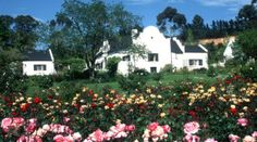 Accommodation in Elgin South Africa, Accommodation in Houw Hoek, guest house in Elgin, B&B in Elgin, South Africa Cape Dutch, South African Art, Holiday Accommodation, Lush Garden, Green Mountain, Shades Of Red, Holiday Destinations, Cape Town, Bed And Breakfast