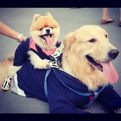 Haze & Kelly @ LittleBird's Dogs Day Out Event