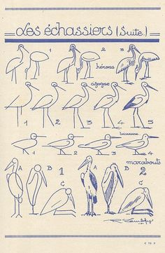 how to draw birds - french art tutorial (les animaux 35 by pilllpat (agence eureka)) Bird Drawings, Easy Drawings, Animal Drawings, Drawing Sketches, Sketching, Drawing Lessons, Drawing Techniques, Art Lessons, Teaching Art