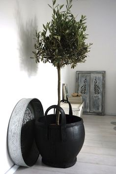 Design Therapy | UN ULIVO DENTRO CASA | http://www.designtherapy.it
