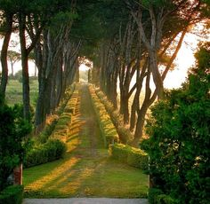gorgeous allee with hedges. bluepueblo: Hedges, Umbria, Italy photo via ryan Beautiful World, Beautiful Gardens, Beautiful Places, Beautiful Pictures, Nature Aesthetic, Dream Garden, Garden Path, Belle Photo, Beautiful Landscapes
