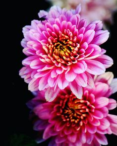 #lovely #flower #pink  #focus #macro zoom #morning #canon 700d #sourabh_jaiswal_photography #india #photography