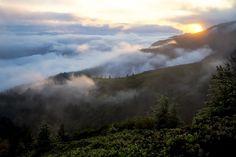Forest, Mountains, Landscape, Mist, Smoke #forest, #mountains, #landscape, #mist, #smoke