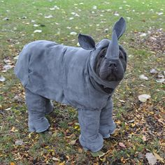 Check out these spectacular dog costumes for Halloween this October Get inspired to dress up your pooch from the 20 unique costumes ranging from simple and cute to winning the dog costume contest. Comment your favorite choice of best dog costume ever! Pet Halloween Costumes, Animal Costumes, Pet Costumes, Halloween Costumes For Dogs, Halloween 2018, Funny Animal Pictures, Funny Animals, Cute Animals, Cute Puppies