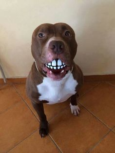 A Ball With Teeth ...