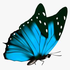 Transparent Blue Butterfly Clipart Blue Butterfly Transparent Background HD Png Download is free transparent pn in 2020 Butterfly clip art Clip art Butterfly photos