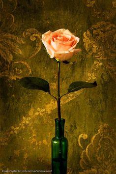 @Aaron Graubart's Still Life #vimity http://www.vimity.com/vip/aaron-graubart/portfolio/dark-things/