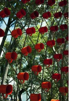 Coffee Cup Canopies : Portal of Awareness