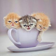 Cup 'o cuties!