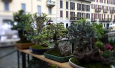 66 Things You Can Grow At Home: In Containers, Without a Garden - HowStuffWorks