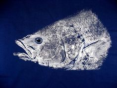 Enormous Striped Bass Head Original GYOTAKU fish rubbing on Navy Cloth